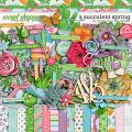 A Succulent Spring by Amber Shaw and LJS Designs
