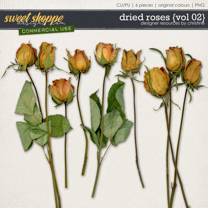 Dried Roses {Vol 02} by Christine Mortimer