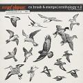 CU BRUSH & STAMPS   ORNITHOLOGY V.2 by The Nifty Pixel