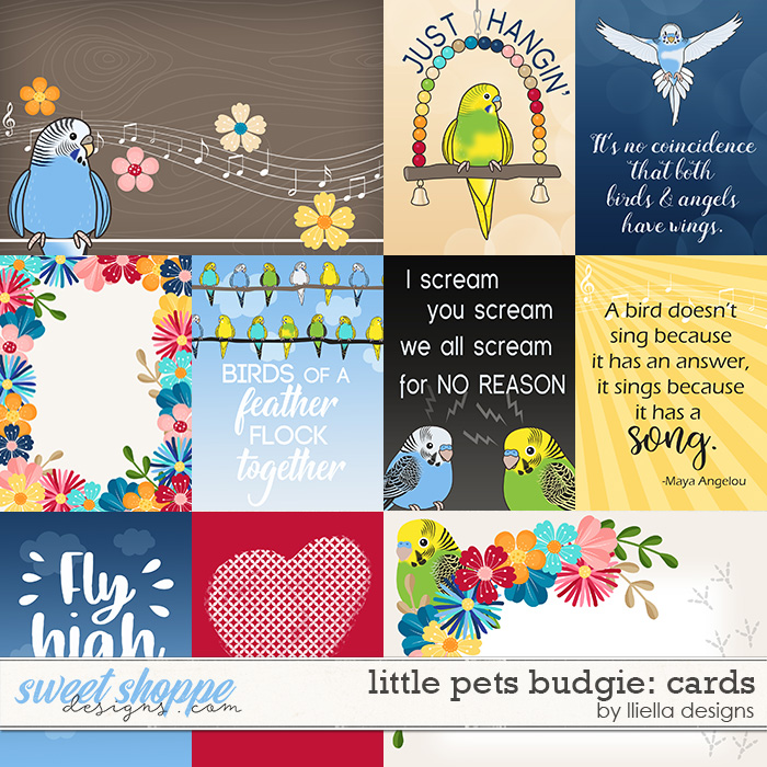 Little Pets Budgie Cards by lliella designs
